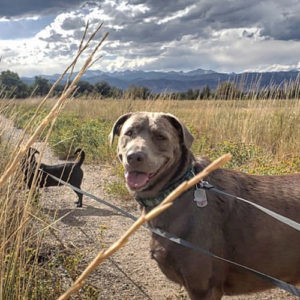 Olive Oscar Therapy Dogs - Boulder Therapist