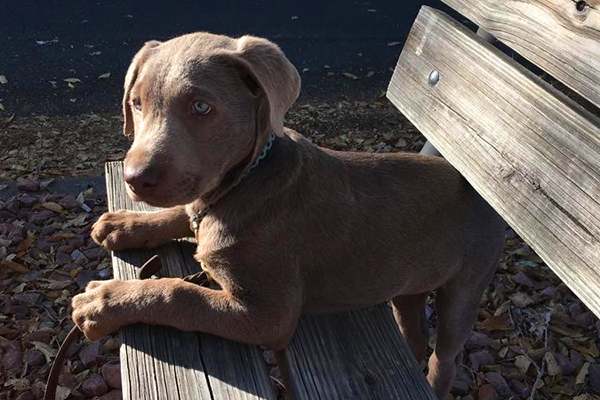 Therapy Dog Blog - Jayma Jamieson Counselor